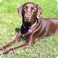 Adopt A Pet :: Coco ~ Adoption Pending - Youngstown, OH