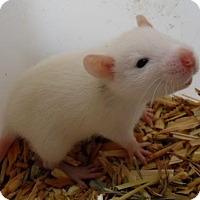 Adopt A Pet :: CNJ BABY GIRLS (4)! - Philadelphia, PA