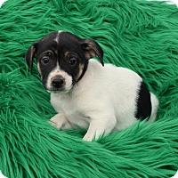 Adopt A Pet :: Bronson - Groton, MA