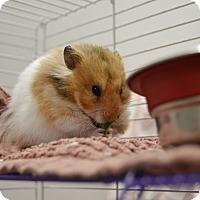 Adopt A Pet :: Aaron - Brooklyn, NY