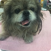 Adopt A Pet :: Toby - Gulfport, MS