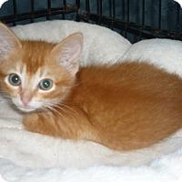 Adopt A Pet :: Midas - Dallas, TX