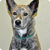 Adopt A Pet :: Luke - Port Washington, NY