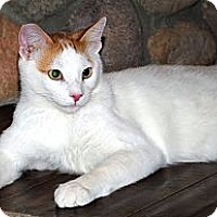 Adopt A Pet :: Rascal - Palmdale, CA