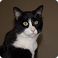 Adopt A Pet :: Sweet, loving Orlando - Scottsdale, AZ