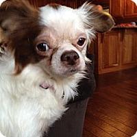 Adopt A Pet :: Candy - Blue Ridge, GA