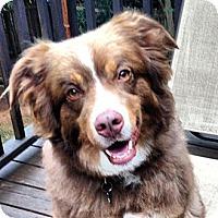 Adopt A Pet :: Russ - PENDING - Savannah, GA