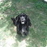 Adopt A Pet :: Sammy - Gadsden, AL