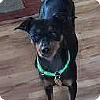 Adopt A Pet :: Abe - Columbus, OH