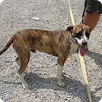 Adopt A Pet :: RHETT - Scottsburg, IN