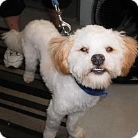Adopt A Pet :: Beaker - Wallaceburg, ON