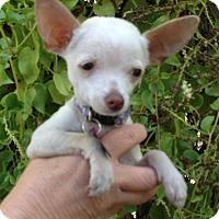 Adopt A Pet :: Sprout - Sacramento, CA