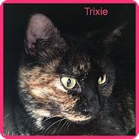 Adopt A Pet :: TRIXIE - Hamilton, NJ