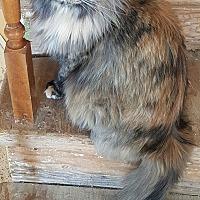 Adopt A Pet :: Chloe - San Fernando Valley, CA