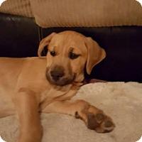 Adopt A Pet :: Thor - Franklin, VA