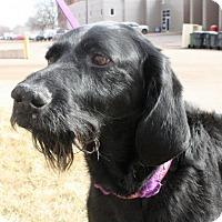 Adopt A Pet :: Tiffy - Omaha, NE