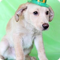 Adopt A Pet :: Freddy - Waldorf, MD