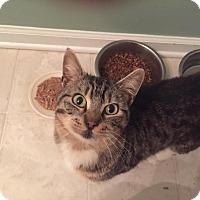 Adopt A Pet :: Willie Nelson - Smyrna, GA