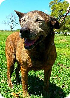 Terrier (Unknown Type, Medium) Mix Dog for adoption in Huntington, New York - Babycakes - N