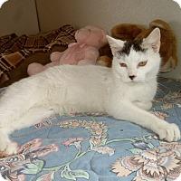 Adopt A Pet :: ADINA - Medford, WI