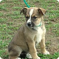 Adopt A Pet :: SPENCER - Waterbury, CT