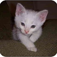 Adopt A Pet :: Sprinkles - Davis, CA