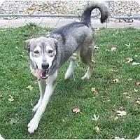 Adopt A Pet :: Shasta - Belleville, MI