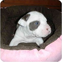 Adopt A Pet :: Mazie - Mesa, AZ