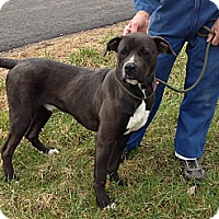 Adopt A Pet :: #002-14  ADOPTED! - Zanesville, OH