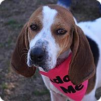 Adopt A Pet :: Izzy - Burleson, TX