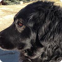 Adopt A Pet :: Hope - Denver, CO