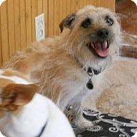 Adopt A Pet :: Rocky - dewey, AZ