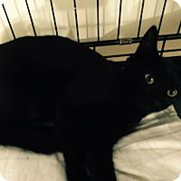Adopt A Pet :: Magda - Speonk, NY
