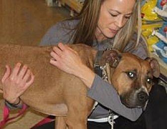 Boxer/Pit Bull Terrier Mix Dog for adoption in Staunton, Virginia - Tucker