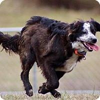 Adopt A Pet :: Phantom - Oliver Springs, TN