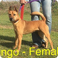 Adopt A Pet :: Bingo - Waycross, GA