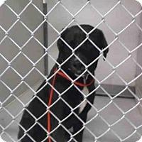 Adopt A Pet :: A047806 - Temple, TX