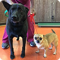 Adopt A Pet :: URGENT-Velvet&Lily - Los Angeles, CA