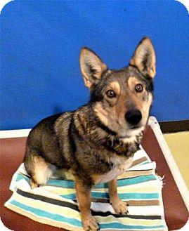 Shepherd (Unknown Type) Mix Dog for adoption in Diamondville, Wyoming - Coti