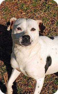 Pit Bull Terrier Mix Dog for adoption in Greensboro, Georgia - Petal