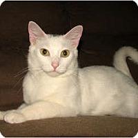 Adopt A Pet :: GW - Norwich, NY