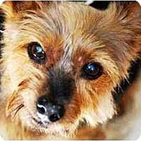 Adopt A Pet :: BECK is BEST! - Commerce TWP, MI