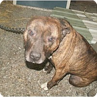 Adopt A Pet :: Buddy - Courtesy Post - Cincinnati, OH