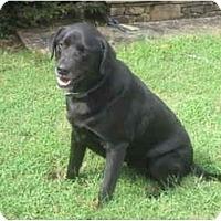 Adopt A Pet :: Wilson - Cumming, GA