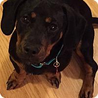 Adopt A Pet :: Rocky - Hixson, TN