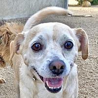 Adopt A Pet :: Archie - Lancaster, CA