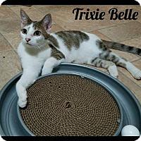 Adopt A Pet :: TrixieBelle (GP) 4.30.16 - Orlando, FL