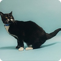 Adopt A Pet :: Troy - Monroe, MI