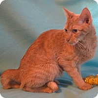 Adopt A Pet :: Marigold - Spring Valley, NY