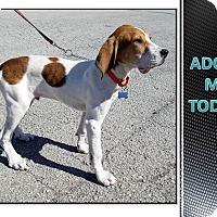 Adopt A Pet :: BABY BODINE - LaGrange, KY